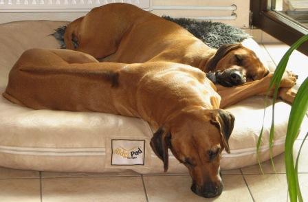 trächtige hunden richtig füttern